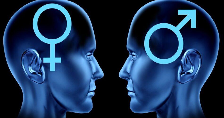 fases de la respuesta sexual humana